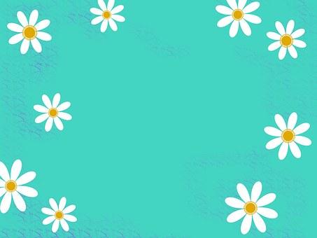 White, Teal, Orange, Background, Daisy