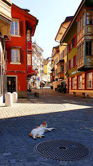 Cat, Animal, Alley, Cobblestones