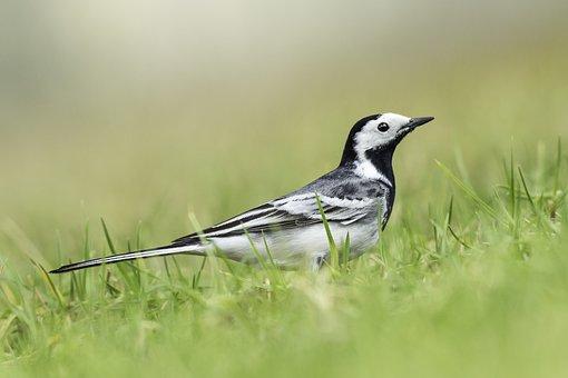 Bird, Nature, Animal, Spring, Birds