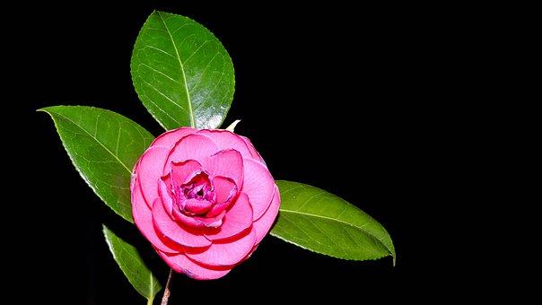 Flowers, Spring, Nature, Plant, Summer, Garden, Bloom
