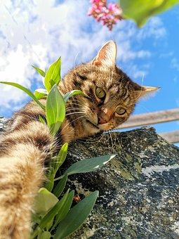 Cat, Blue Sky, Sky, Pet, Tiger, Domestic Cat, Tiger Cat