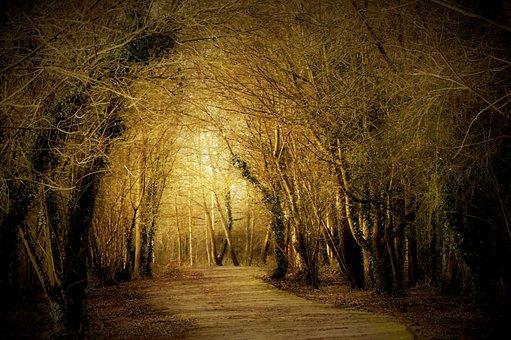 Edge, Path, Wood, Hiking, Nature, Trail, Promenade