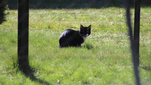 Animals, Mammals, Homemade, Cat, Black, Favorite, Lawn