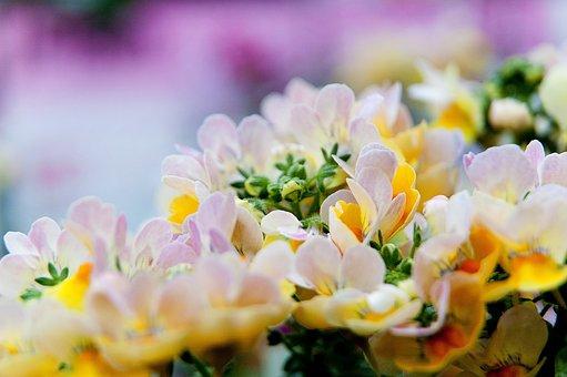 Media Indonesia-project, Tolerance, Flowers, Plant