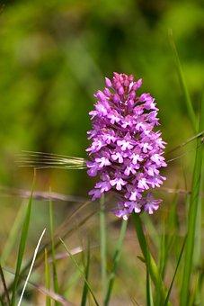 Hiking, Nature, Promenade, Prairie, Flowers, Orchids