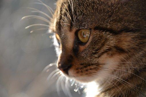 Cat, Tomcat, Animals