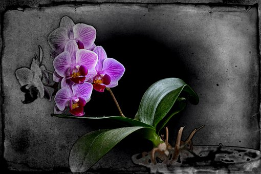 Orchid, Picture, Color, Purple, Green
