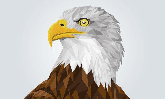 Adler, Bald Eagle, Drawing, Bird, Head, Figure