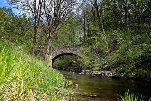 Striegstal, Hiking, Nature, Trees, Plant
