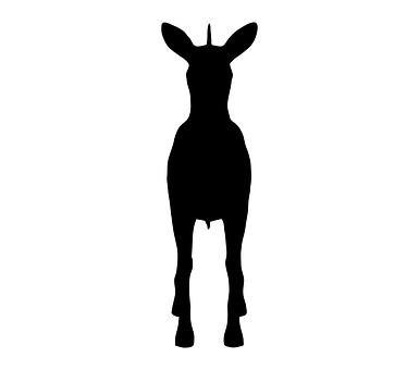 Zebra, Animal, Nature, Wild, Wildlife, Zoo, Africa