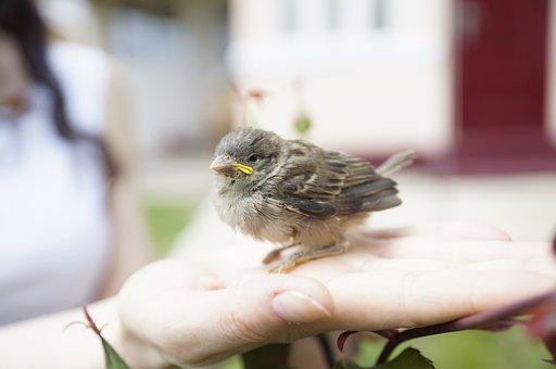 Bird In Hand, Sparrow, Nature, Bird, Captured