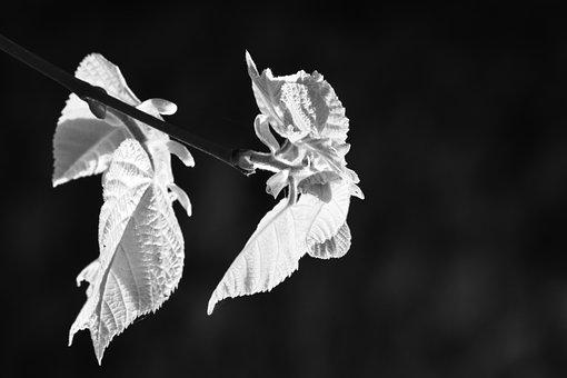 Leaves, Texture, Form, Bokeh, Black And White