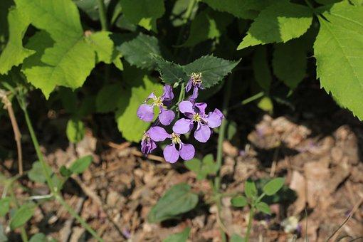 Purple, Flower, Spring, Vitality, Plant, Petal, Violet