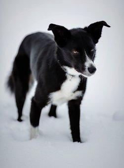 Dog, Pet, Canine, Fur, Black, The Abdomen, White, Going