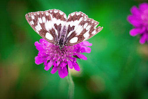 Butterfly, Flower, Purple, Pointed Flower, Blossom