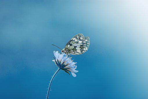 Butterfly, Animal, Insect, Close, Chess Board