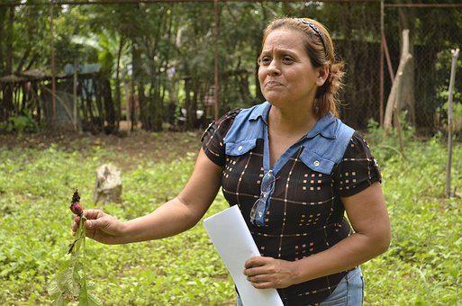 Radish, Nicaragua, Agriculture, Women, Fermer, Growing
