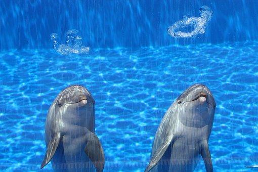 Dolphins, Aquarium, Fish, Blue, Two, Talk, Swim