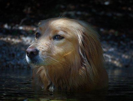 Dog, Hybrid, Pet, Water, Fun, Wet, Swim, Drink