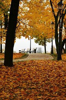 Autumn In The Park, Autumn, Autumn Nature