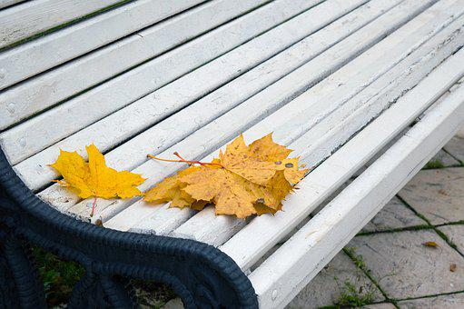 Autumn Leaves, Park, Bench, Date, Yellow Leaves