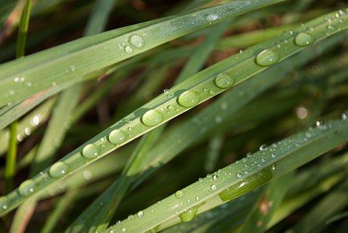 Dew, Foliage, Grass, Drop, Drops, Dewdrop, Macro