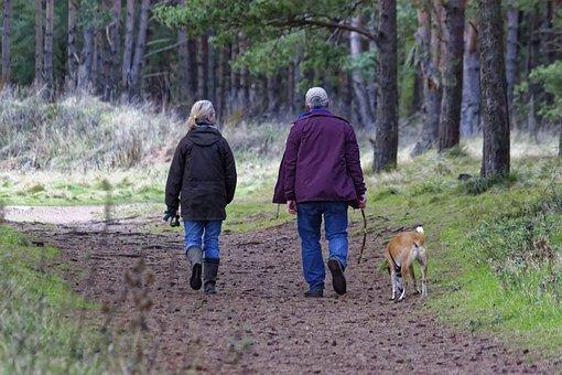 Dog Walking, Dogs, Pet, Walk, Animal, Walking Dog