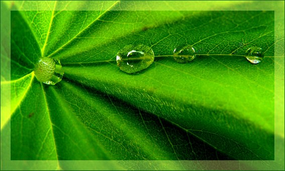 Drip, Drop Of Water, Close Up, Nature, Green