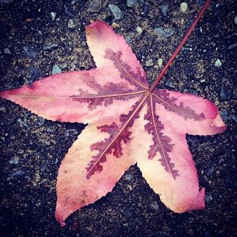 Leaf, Oak, Fallen, Autumn, Nature, Foliage, Fall