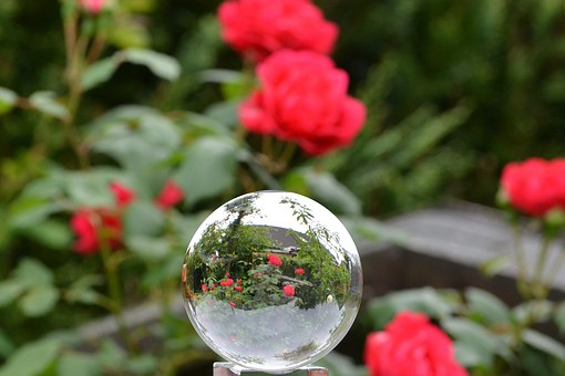 Rose, Glass Ball, Rose In Glass Ball, Globe Image