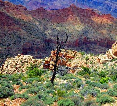 Grand Canyon, Arizona, Canyon, Grand, Park, Landscape