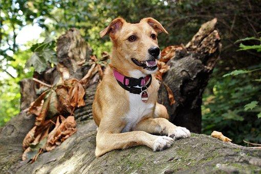 Dog, Autumn, Hybrid, Nature, Animal, Rest, Active
