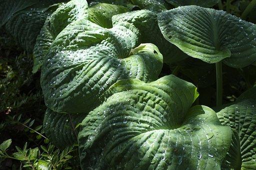 Leaf, Large, Green, Shiny, Exotic, Plant, Nature