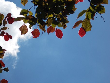 Leaves, Coloring, Walnut, Sky, Blue, Leaf Coloring