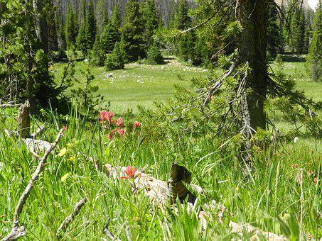 Meadow, Uinta, Utah, Green, Summer, Forest, Day