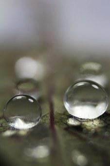 Nature, Droplet, L, Water, Drop, Natural, Fresh