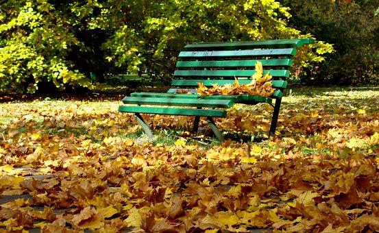 Autumn, Bench, Park, Foliage, Nature, Spacer, October
