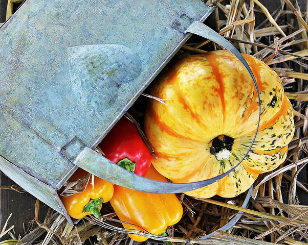 Thanksgiving, Pumpkin, Paprika, Autumn