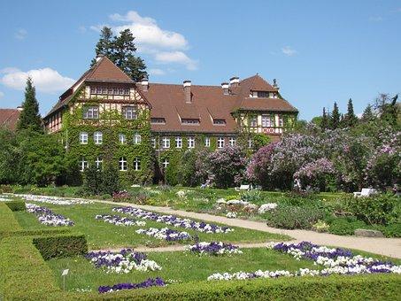 Park, Botanic, Garden, Botanical, Green, Nature, Tree