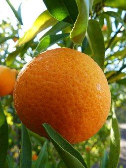 Tangerine, Mandarin, Citric