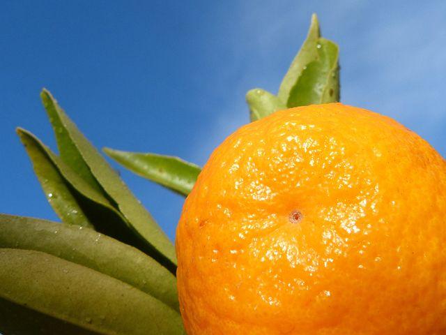 Tangerine, Leaf, Sky, Citric