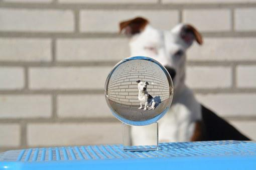 Theo, Jack Russell, Terrier, Ball, Glass Ball