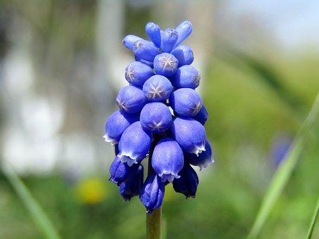 Background, Nature, Blue, Beautiful, Flower, Plant
