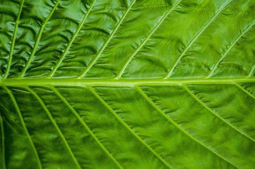 Leaf, Horizontal, Green, Nature, Color, Background