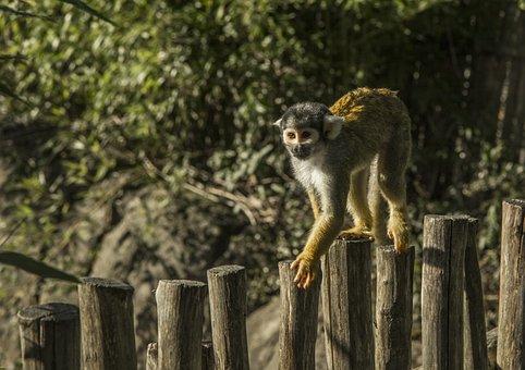 Monkey, Wood, Animals, Nature, Mammal