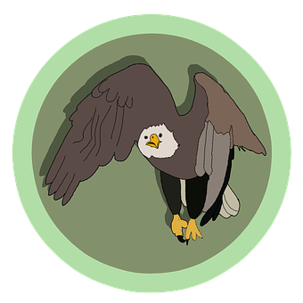 Keywords, Eagle - Bird, Bird, Flying, Bald Eagle