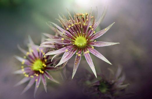 Flower, Flowers, Spring, Nature, Beauty, Unusual