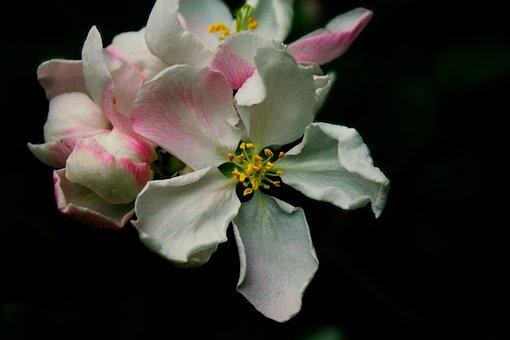 Flowers, Spring, Nature, Summer, Bloom, Blossom, Flora