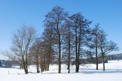 Swiss Francs, Germany, Tree, Bavaria, Landscape, Sky