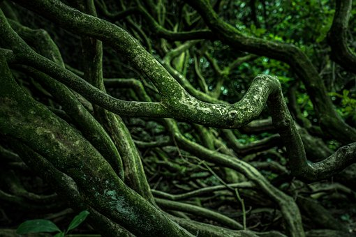 Roots, Wood, Tree, Nature, Forest, Green